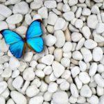 The Magic of Metamorphosis: Organizational Change and Inspirational Leadership